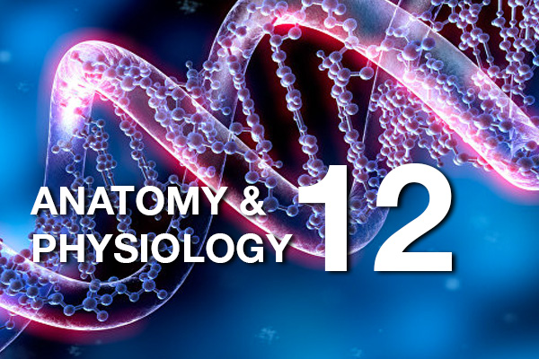 Anatomy and Physiology 12